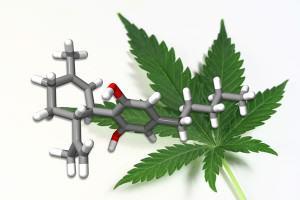 Noticias del cannabis medicinal, enero 2013