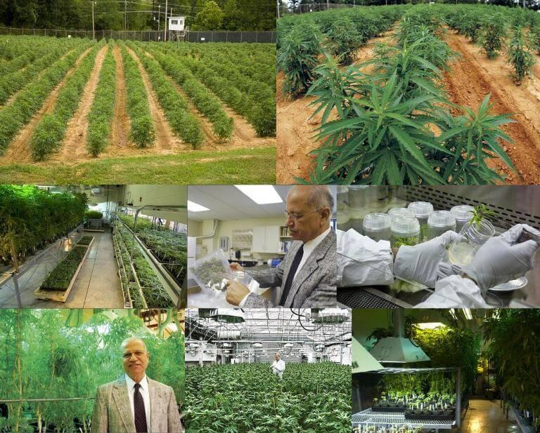 Notícias cannabis medicinal Junio 2014