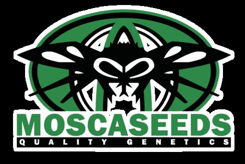 Mosca Seeds. Banc de granes de cànnabis procedent dels EUA