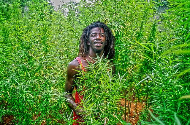 Jamaica i el Cànnabis