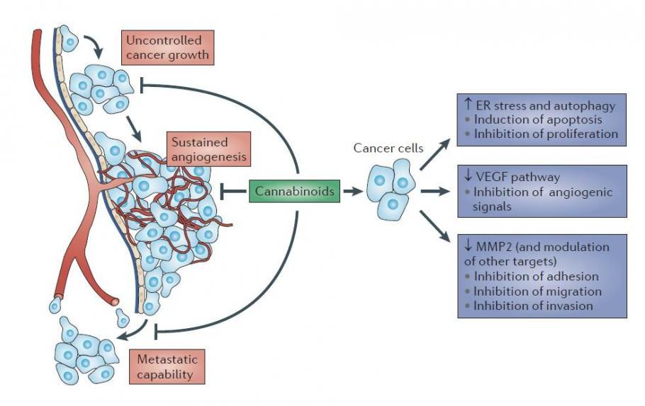 82 studies on the efficiency of marijuana against cancer