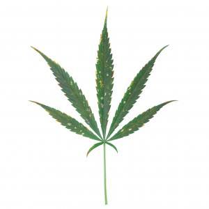 Magnésium: carence et excès chez le cannabis