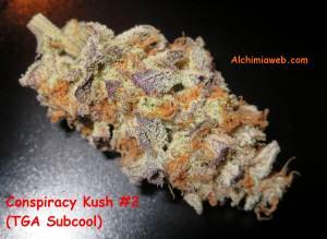 Bud de Conspiracy  Kush #2
