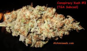 Bud de Conspiracy  Kush #3