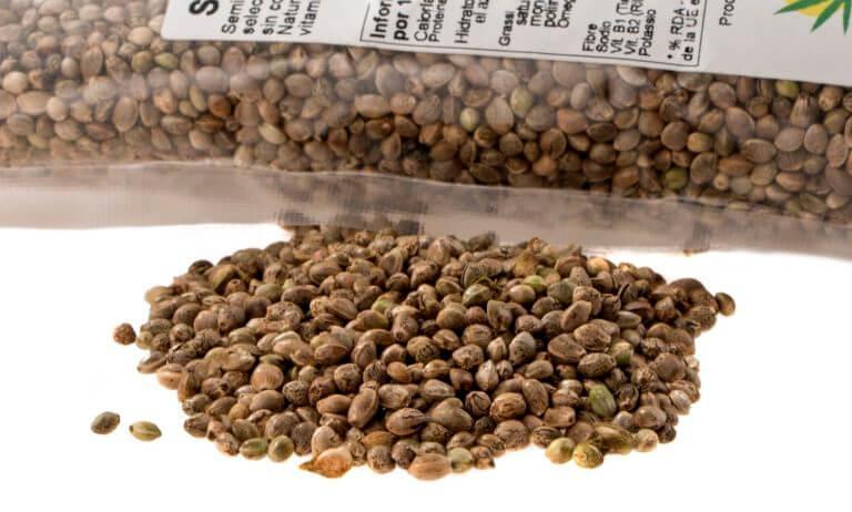 La consommation de graines de chanvre