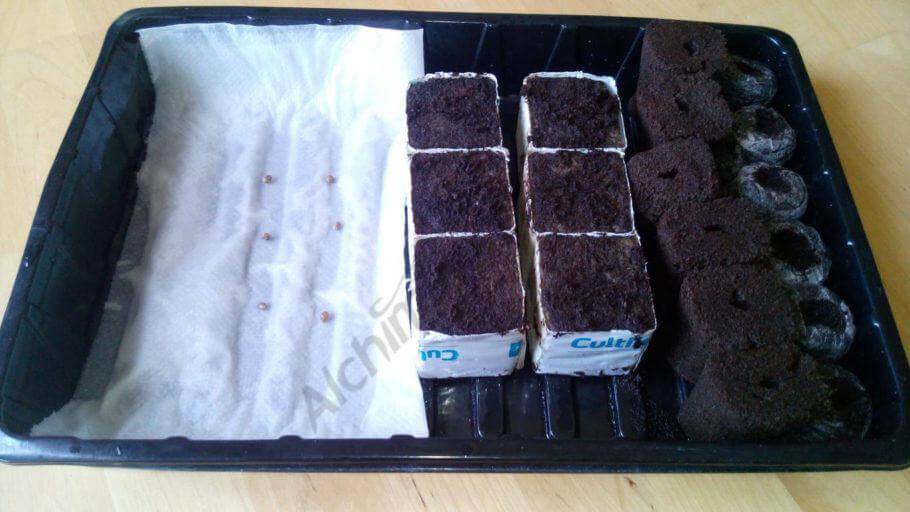Medios de germinación con las semillas ya plantadas