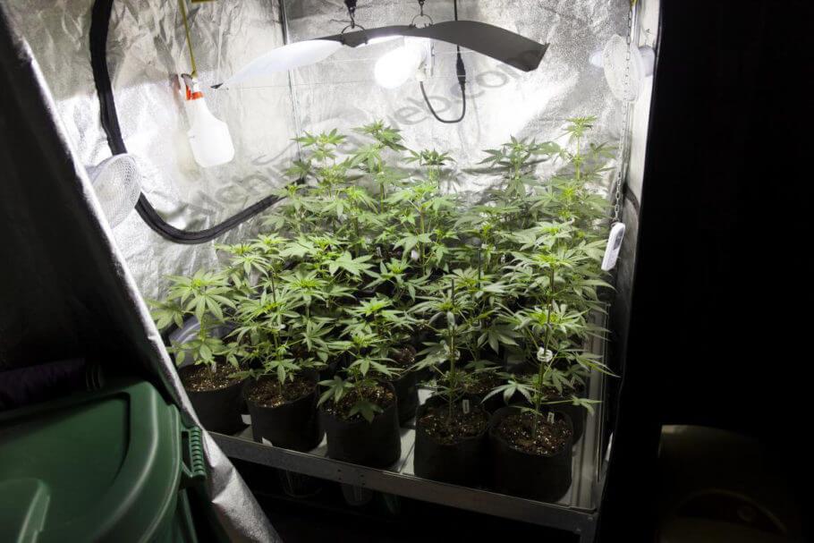 Del Grow Blog Alchimia Shop Armarios De Cultivo Cannabis CxBedrWo