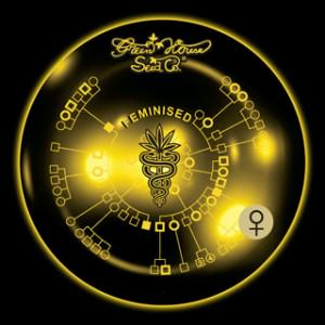 Greenhouse Seeds presenta sus novedades para el 2011