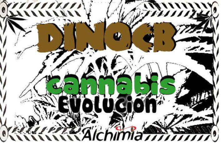 Evolución de la Marihuana - Capítulo 3