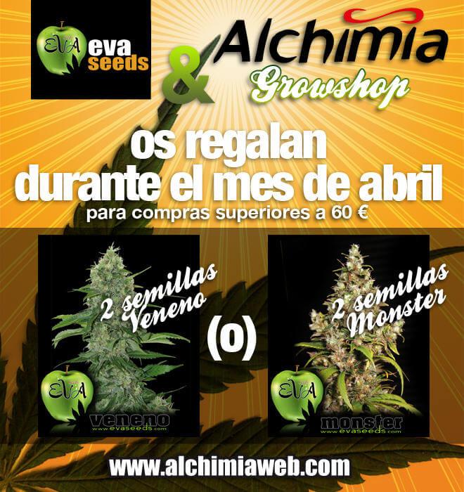 Eva Seeds y Alchimia os regalan 2 semillas feminizadas