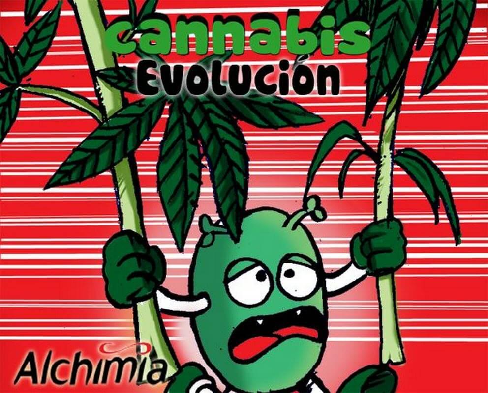 Evolución de la Marihuana - Capítulo 4