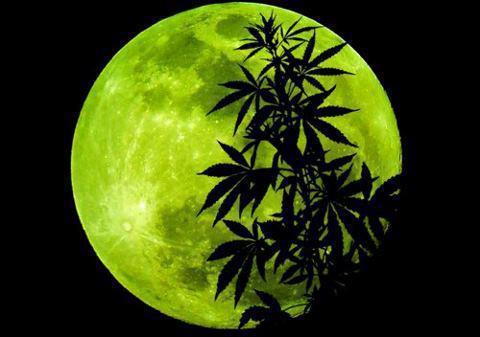Influencia de la Luna en el cultivo de Marihuana