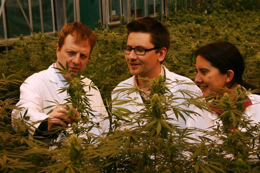 Reading-cannabis-research