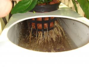 Gracias al filtro las raíces están sanas.