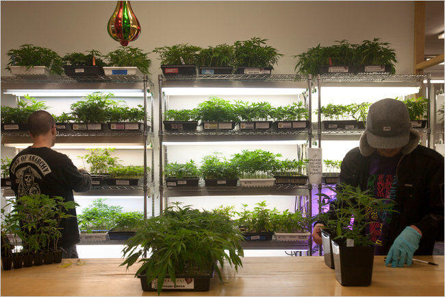 Marihuana recreativa legal en Colorado