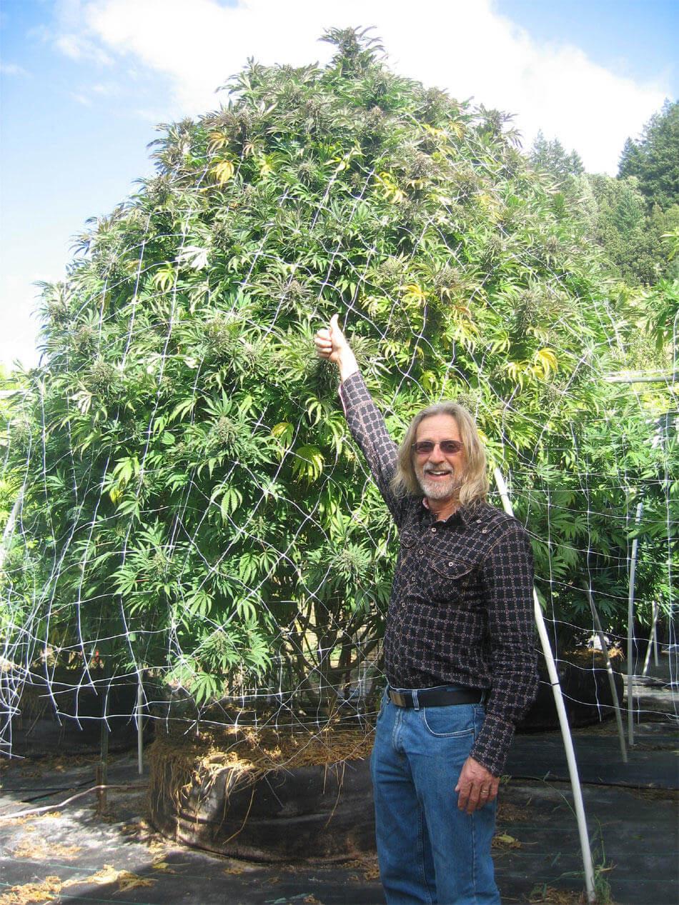 Jorge Cervantes y la marihuana en exterior