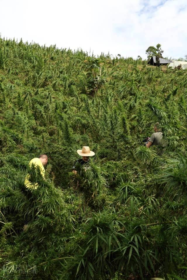 Strain Hunters Seedbank: semillas de marihuana del mundo