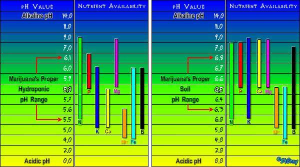 El PH y la marihuana - Blog del Grow Shop Alchimia