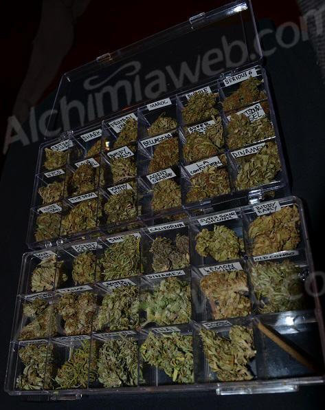 Los frutos de un cultivo de marihuana diversificado, listos para disfrutar