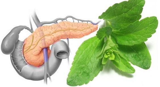 Stevia para estimular el páncreas en la diabetes