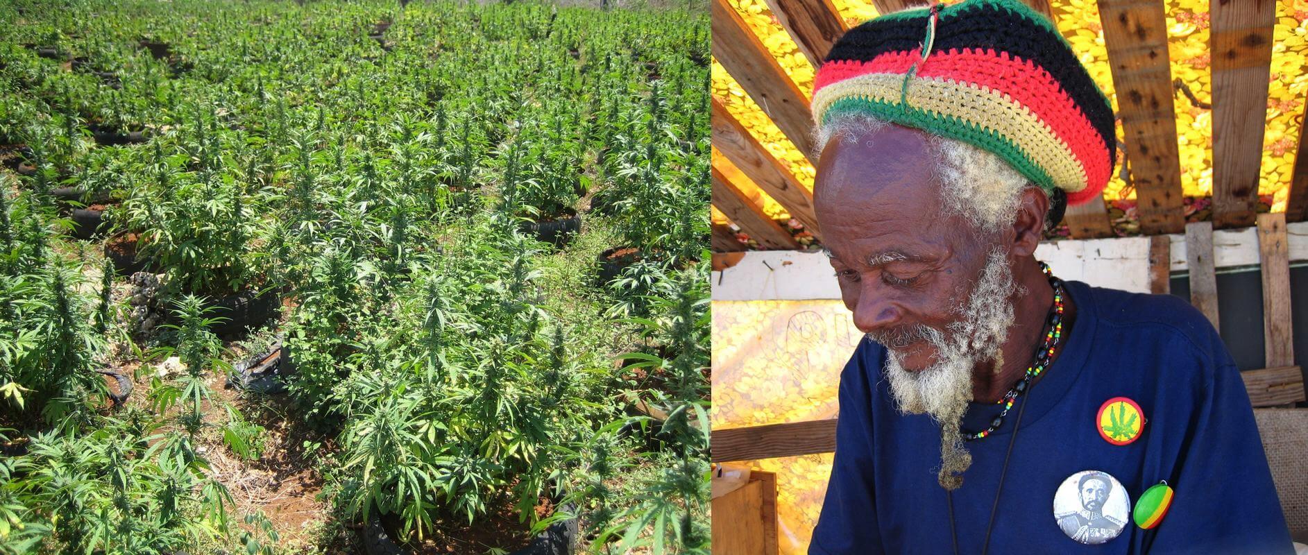 Ganja y Rastafarismo