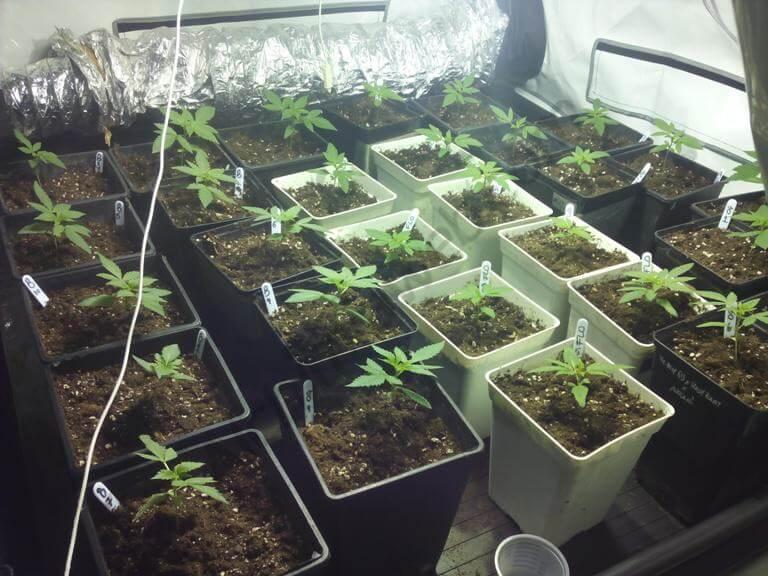 inicio crecimiento semana 1