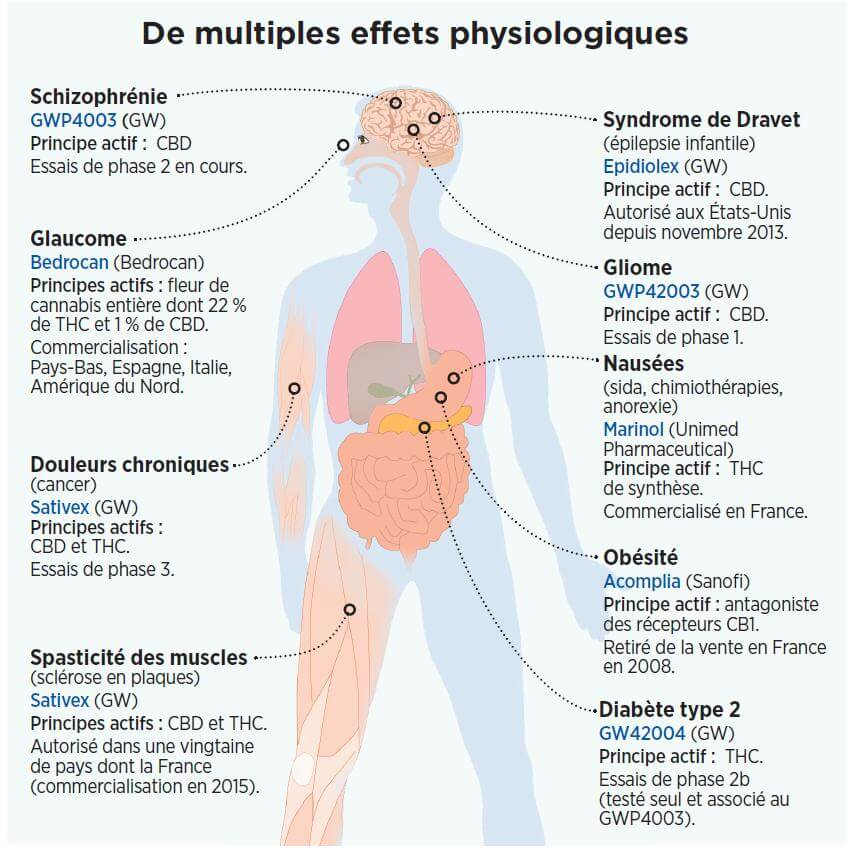 Efectos fisiológicos de la marihuana (fuente: Science et Avenir, Marzo 2014)