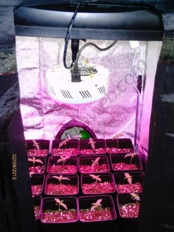 Cultivo en armrio de 0.50m2