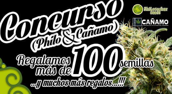 concurso-philosopherseeds--canamo-21
