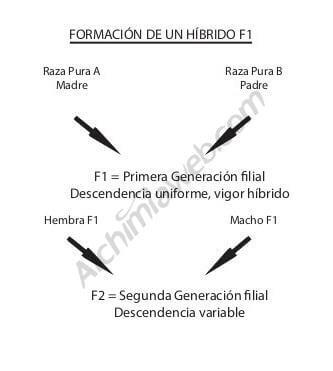 hibrido f1