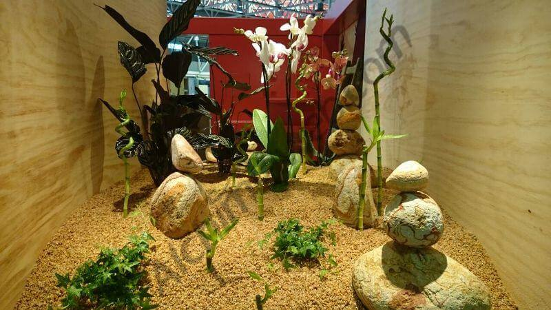 Orquídeas y jardín Zen