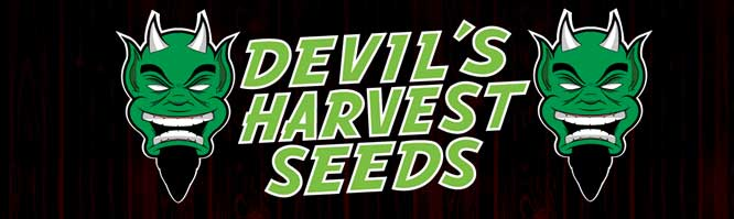Presentación de The Devil's Harvest Seeds en Alchimia