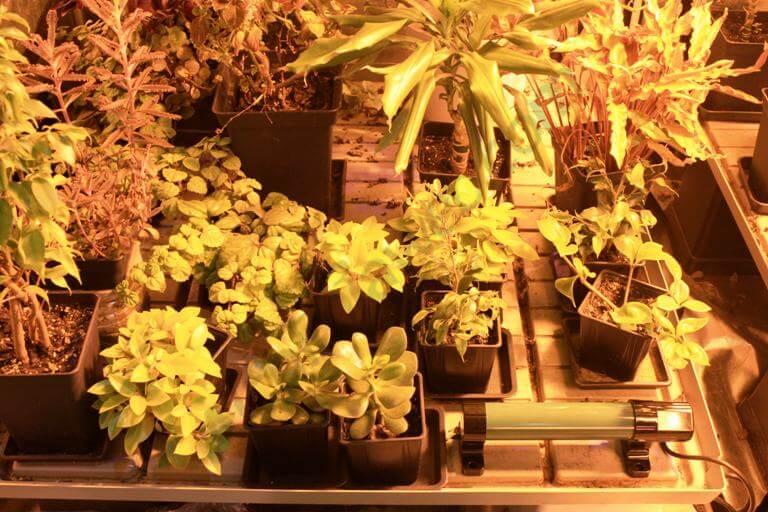 Calentador tubular encima de la bandeja de cultivo