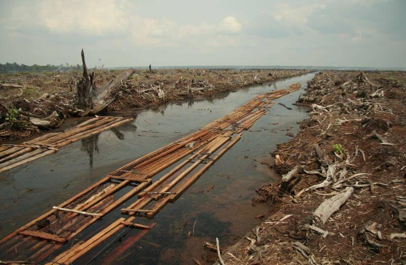 Efectos de la deforestación - Wikipedia
