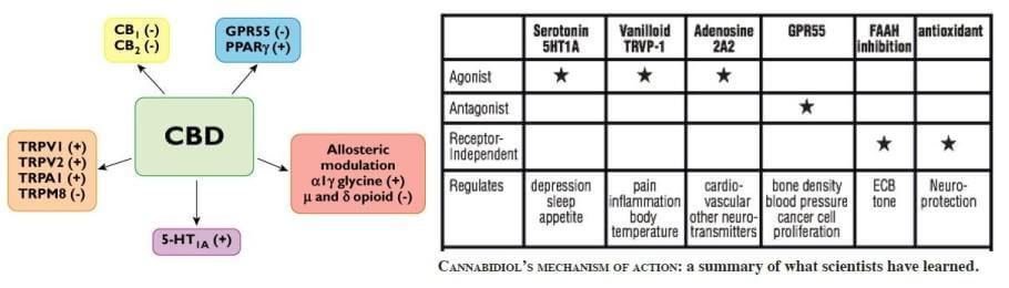 El CBD el cannabinoide legal