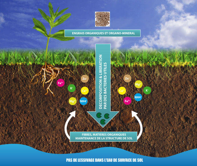 Abonos para cultivar marihuana en tierra