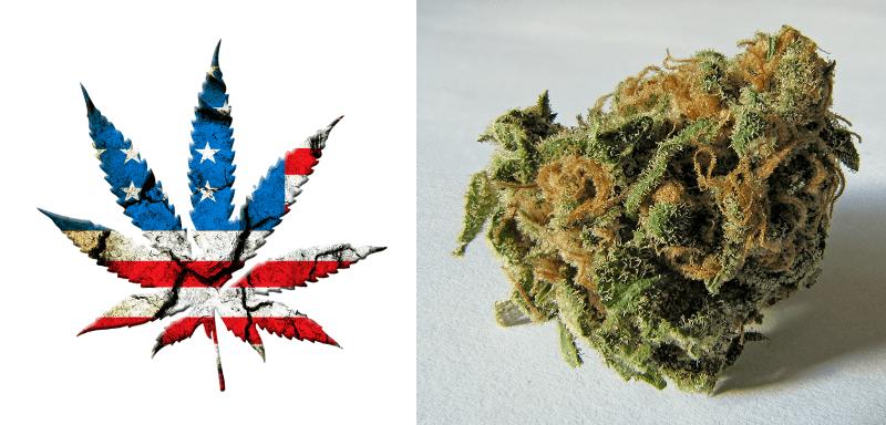 USA Legaliza la marihuana