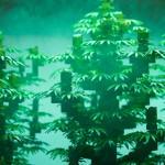 Marihuana a plena potencia