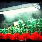 Mirando como crecen las plantas