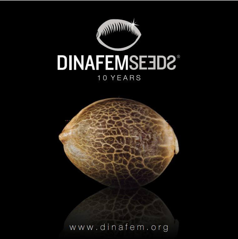 Dinafem 10 años