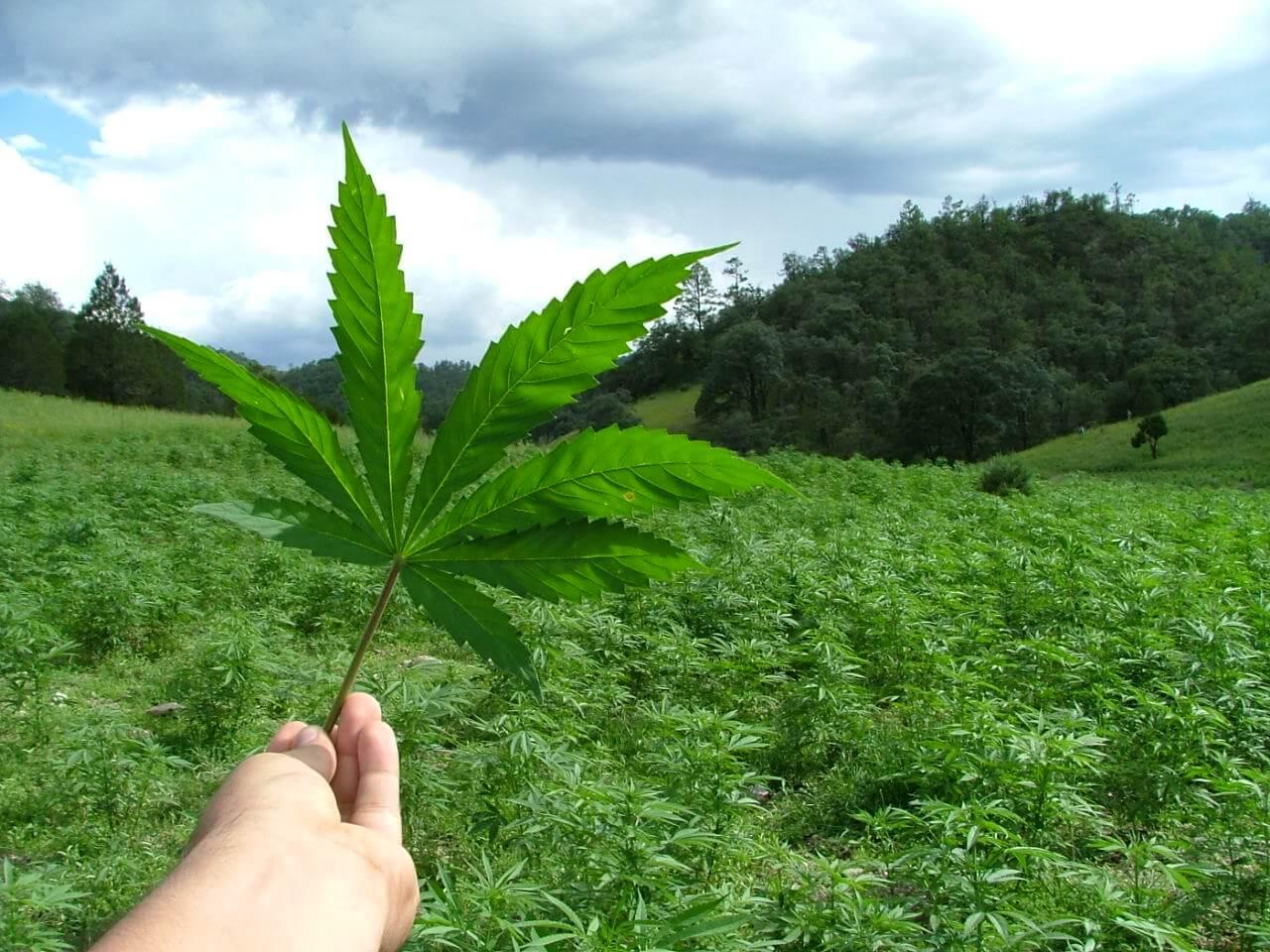 Actualidad de la marihuana medicinal, Noviembre 2015