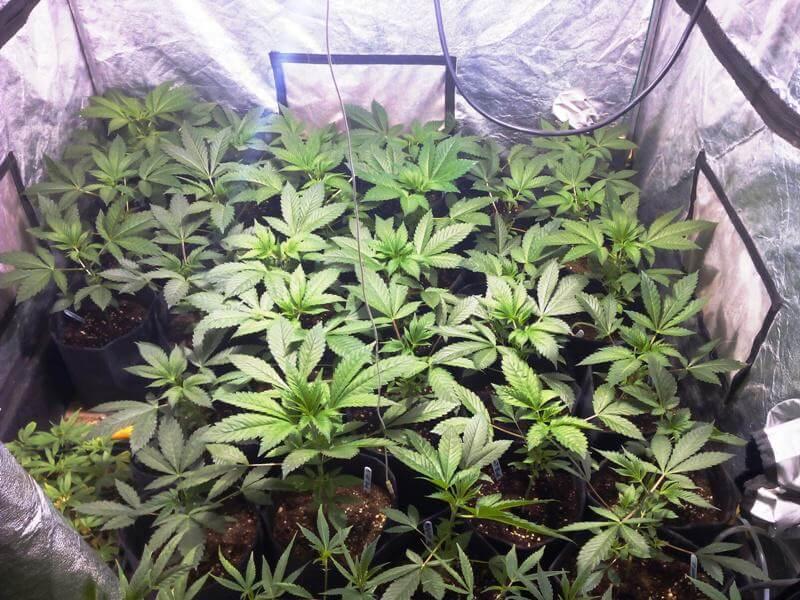 Crecimiento de semillas regulares
