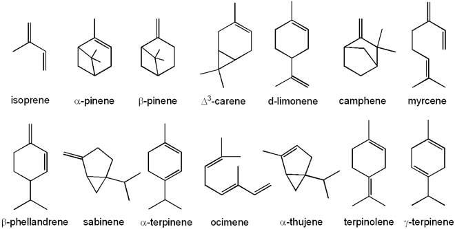 A few of the terpenes found in cannabis