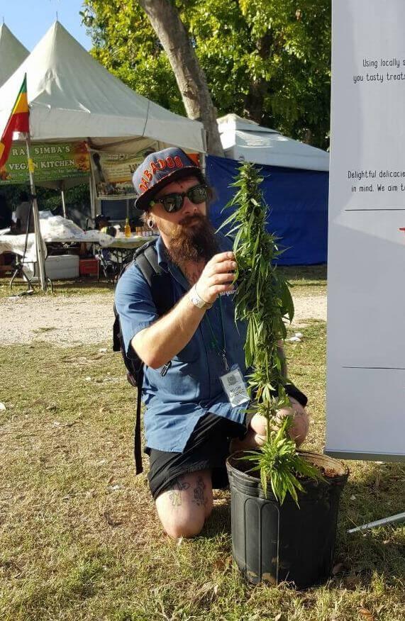 Exposición de plantas en el Stepping High Ganja Festival