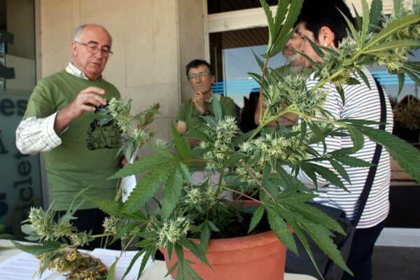 Hablando sobre marihuana medicinal