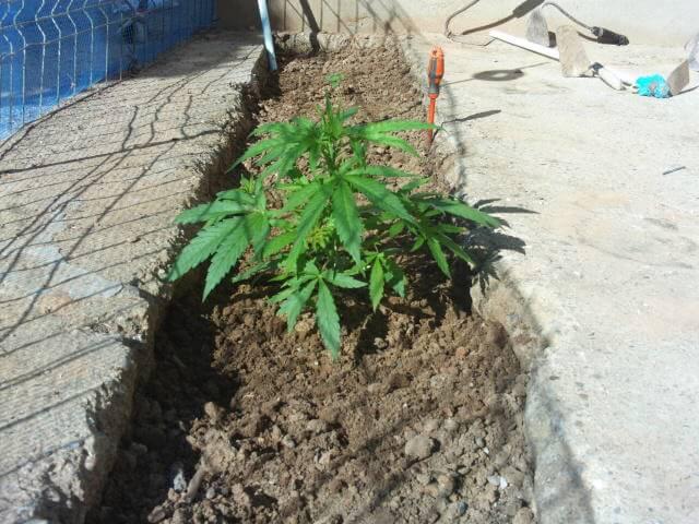 Critical plantada al exterior
