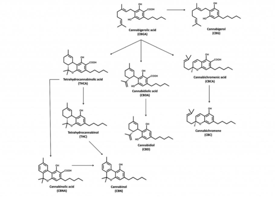 Síntesis de los principales cannabinoides