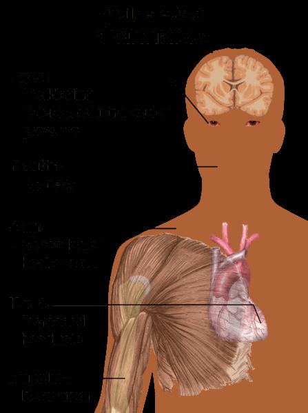 La marihuana afecta a distintas áreas de nuestro organismo