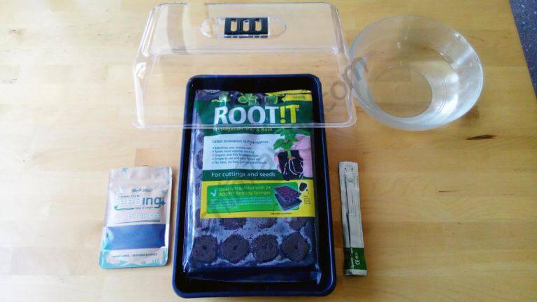 Materiales necesarios: agua, invernadero, bisturí, tacos RootIt y Powder Feeding Enhancer