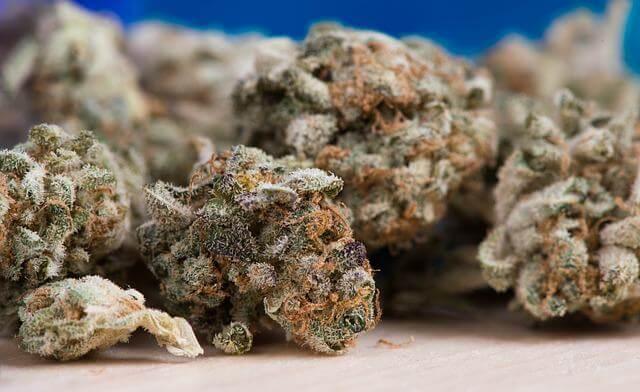 7 variedades de marihuana super productivas
